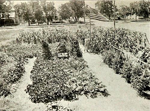 Raymond_Search_Garden